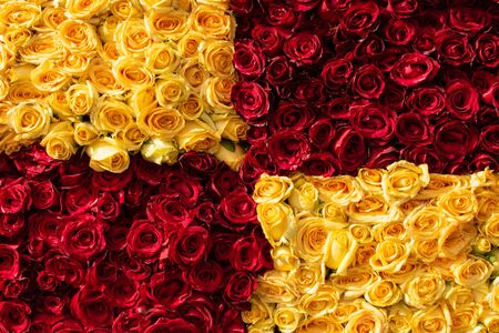 bunch of vibrant beautiful colorful roses red yellow carpet wallpaper many no people