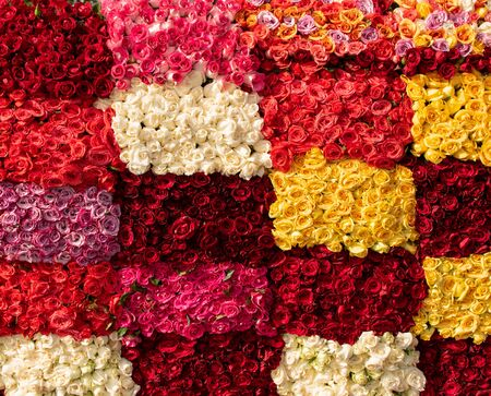 bunch of vibrant beautiful colorful roses red yellow white pink orange salmon purple carpet wallpaper many no people