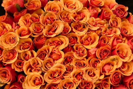 bunch of vibrant beautiful colorful roses orange carpet wallpapers many square no people flower
