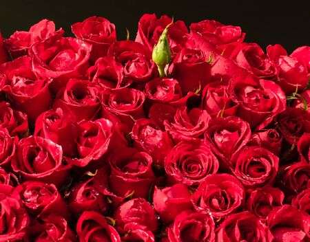 bunch of vibrant beautiful colorful red roses pink carpet wallpapers many square no people flower black background