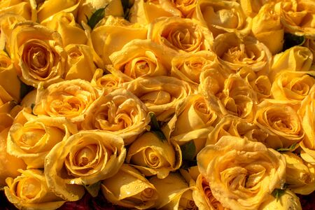 bunch of vibrant beautiful colorful yellow carpet wallpapers many square no people flower