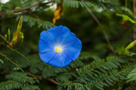 one blue wild flower green leafs background Stok Fotoğraf