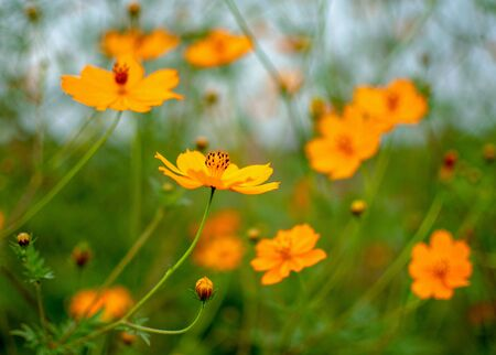 many orange wild flower green leafs background Stok Fotoğraf