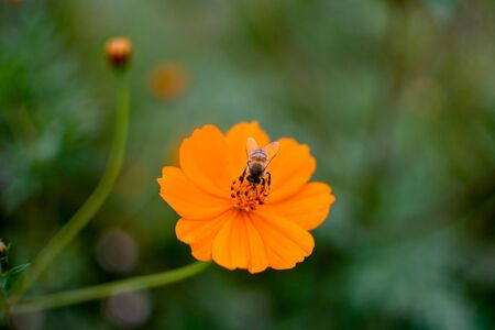 one orange wild flower green blurred leaf background Stok Fotoğraf
