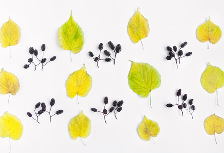 Bright pattern of autumn yellow leaves and alder nuts on white background. Top view, flat lay, view from above