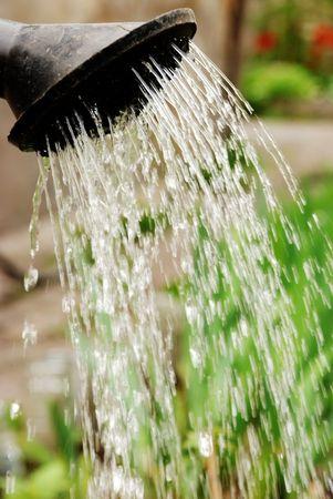 Annaffiatura di una stagione di fioritura nel giardino di calore caldo d'estate