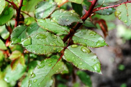 earlier: Earlier and the cool morning which has covered with sweet dew foliage Stock Photo