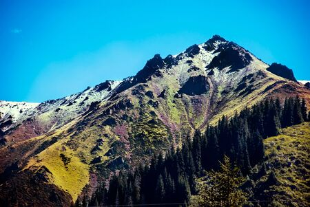 High altitude above sea level, rocky mountains covered with greenery and fir trees