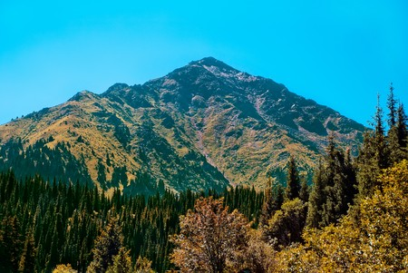 Rocky mountains covered with pine forest and trees