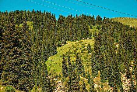 Large coniferous forest, covered with green pine trees high in the mountains