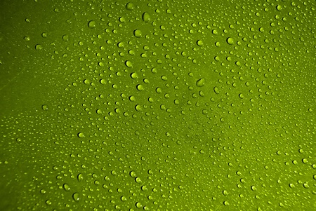 Crystal clear water drops over green background Stock Photo - 9078286