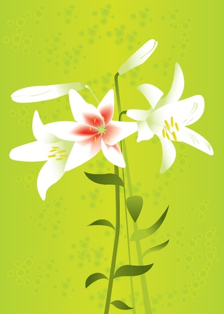 Vector floral background with lilies for your card or invitation. Vector