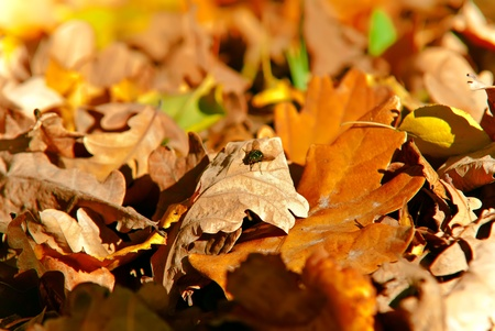 The fallen autumn leaves on the ground and flying fly.