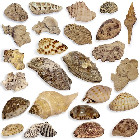 Set collection seashells on the white background. photo