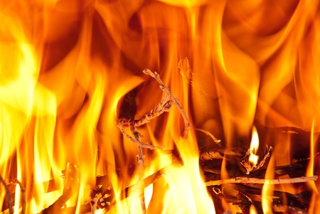 Burning wood in the fireplace and the flames  photo