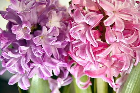 Close up spring flowers background. Beautiful nature photo