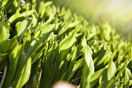 Close up green leaf in garden. Soft focus photo