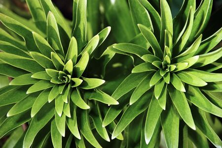 Closeup of fresh green plants in the spring garden  photo