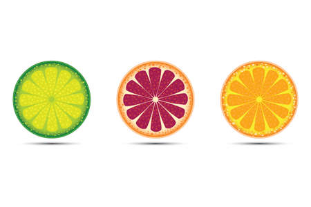 Vector illustration citrus fruits orange, lime and grapefruit on white background  illustration