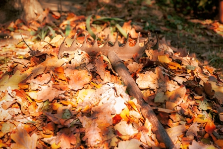Heap fallen leaves from the trees and rake in the land  photo