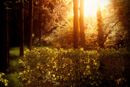 Enigmatic beautiful iridescent dense forest at sunset. Stock Photo