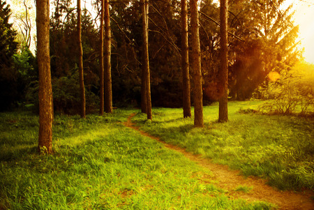 Mystical dense forest with a footpath shimmering sunlight. Stock Photo