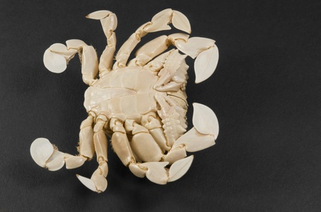 reverse side of a moon crab in dark background photo
