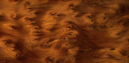 full frame abstract burl wood background Stock Photo - 10840102