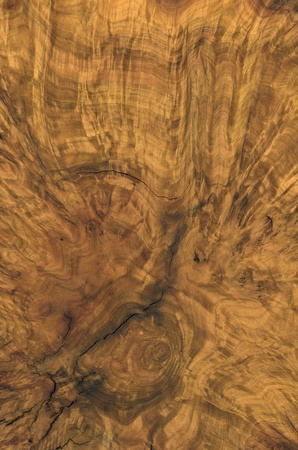 nobility: full frame abstract burl wood background