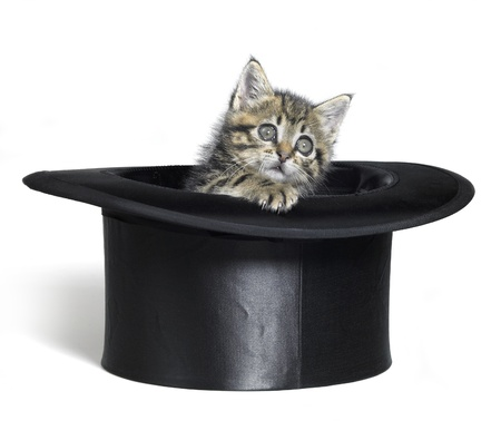Studio photography of a kitten inside a top hat, isolated on white photo