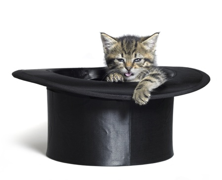 Studio photography of a funny faced kitten inside a black top hat, isolated on white photo