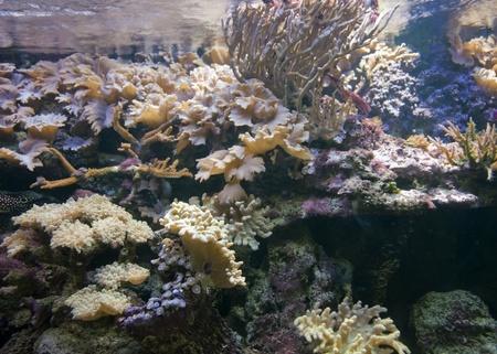paisajes submarinos con los corales y otros animales marinos Foto de archivo - 10840220