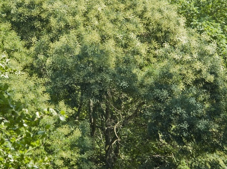 photosynthetic: abstract background showing some shrub and trees in sunny ambiance Stock Photo
