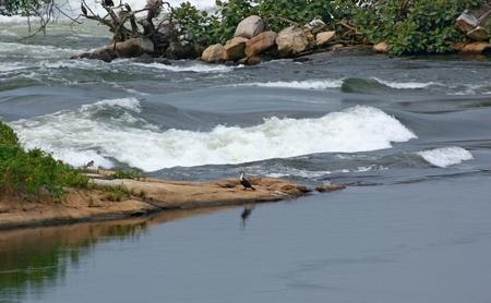 waterside scenery showing a River Nile detail near Jinja in Uganda (Africa) Stock Photo - 10840212