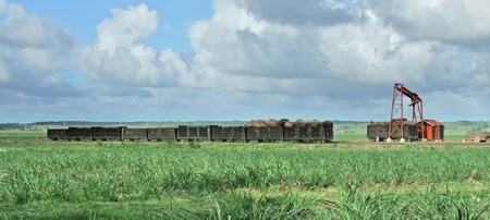 sugarcane harvesting scenery at the Dominican Republic, a island of Hispanola wich is a part of the Greater Antilles archipelago in the Carribean region photo