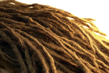 jamaican ethnicity: detail of some dreadlocks, warm illuminated in white back