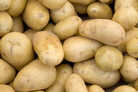 agrar: full frame background with lots of potatoes