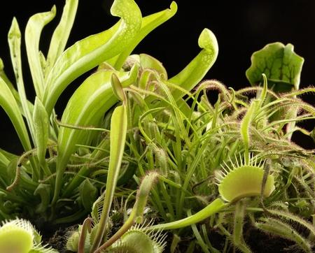 various carnivorous plants in black back photo