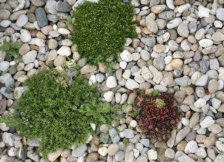 'living organism': natural background with shrubby plants and pebbles