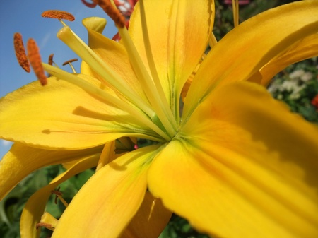 dynamic low angle shot of a yellow flower in natural back photo