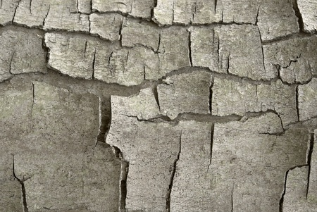 abstract bark closeup with lots of cracks Stock Photo - 10839775