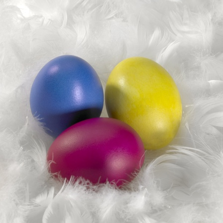 filamentous: three colored Easter eggs in a background of white down feathers