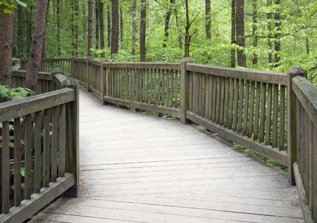 elevated walkway: standing on a big wooden bridge in a forest at spring time