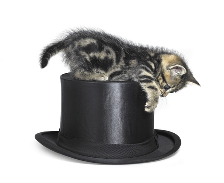 tophat: Studio photography of a kitten playing with a black top hat, isolated on white