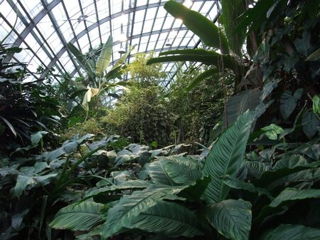 inside a greenhouse with lots of tropical plants photo