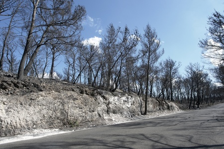 sunny scenery with burned forest and road in Southern Italy Stock Photo - 10863047
