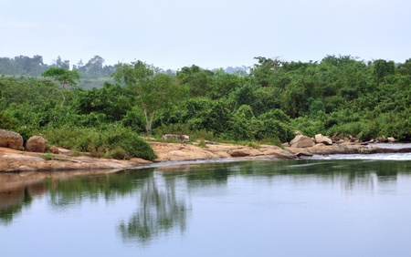 waterside scenery showing the Victoria Nile in Uganda (Africa) Stock Photo - 10862925