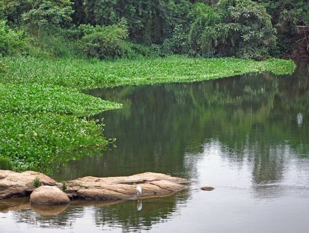 overgrown waterside scenery showing the Victoria Nile in Uganda (Africa) photo