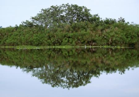 waterside vegetation scenery around the Lake Victoria near Entebbe in Uganda (Africa)