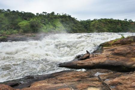 white nile: parte de las Cataratas Murchison, en Uganda (�frica)